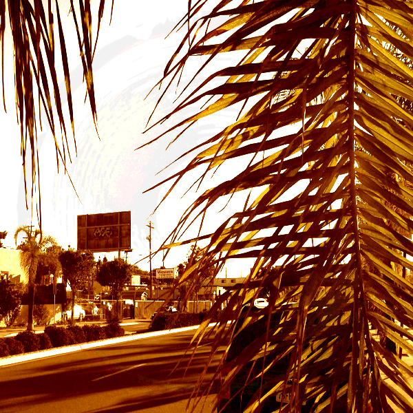 Graffiti marks the backside of a billboard, rising above El Cajon Blvd., viewed from behind a palm tree