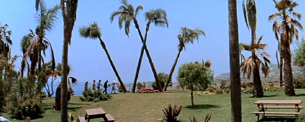 Idyllic palm trees lean to form a W in a beach front park (from It's a Mad, Mad, Mad, Mad World)