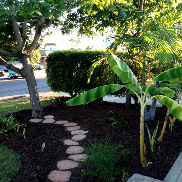 Trees, a hedge, banana plants, palms and stepping stones through a fern garden