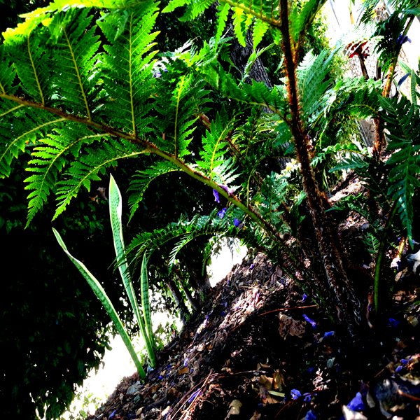 Close up of the tree fern in the Southwest Terrance
